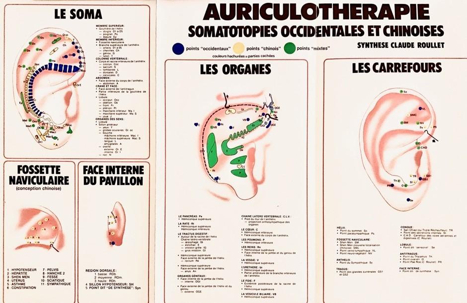 auriculothérapie - schéma de l'oreille
